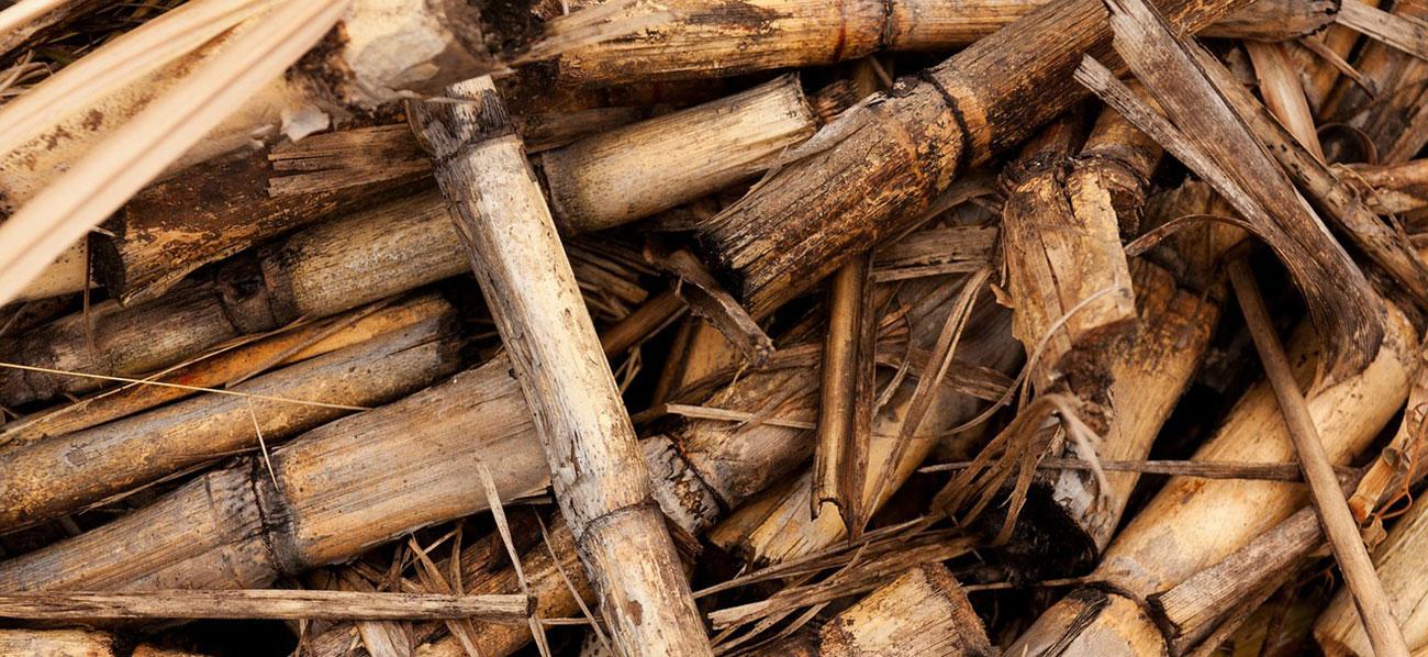 calderes de biomasa